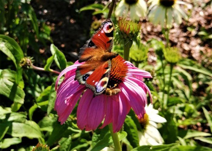 Motyl, kwiat na rabacie