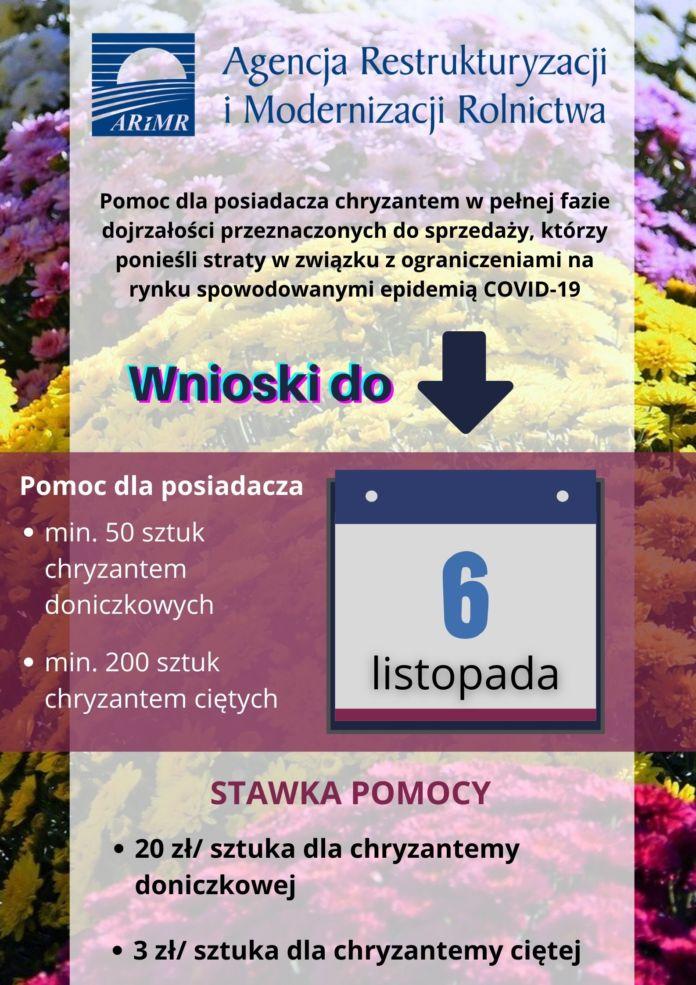 Pomoc chryzantemy - covid