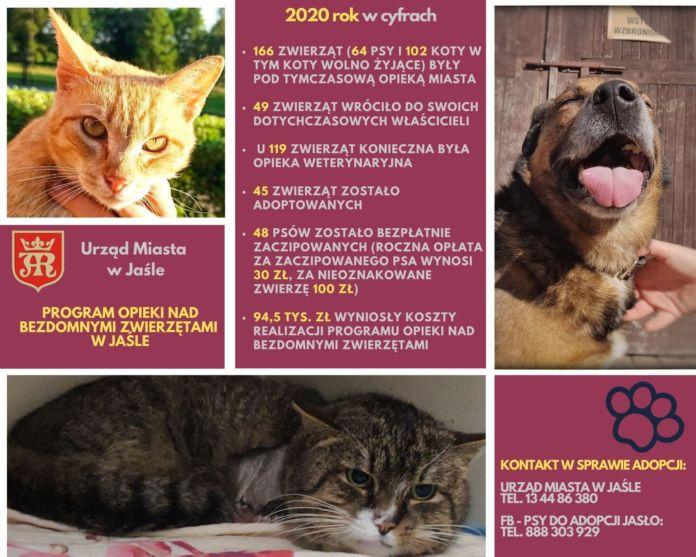 2020 rok w cyfrach, dane dotyczące programu opieki nad bezdomnymi zwierzętami w Jaśle. Zdjęcia zwierząt oraz dane teleadresowe w sprawie adopcji.