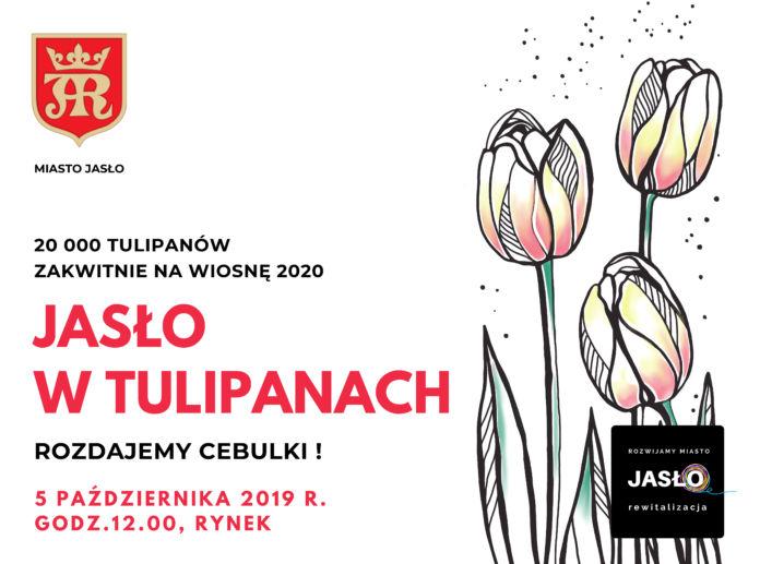 akcja - tulipany